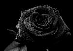 أنا عندي صديق تشاجرت معه لسبب {لا يذكر } اصبحت حزينة على هذا   و كلما طلبت السماح يغضب و يرحل عن الانظار   و انا ابقى منهمرة في البكاء لشدة تأثري...